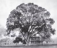 Wethersfield_A History_Raf_great elm-thumb-320x267-338.jpg